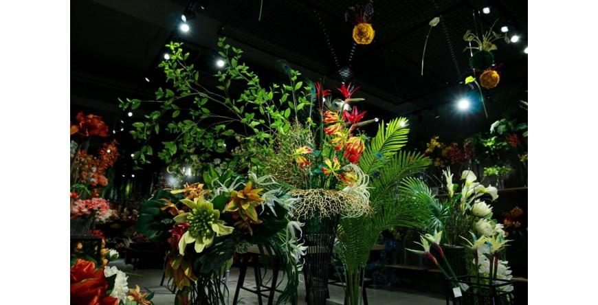 熱帶雨林植物櫥窗
