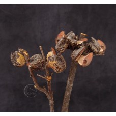 乾燥花-北海道 Hahea