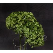 不凋花-大地農園 帶骨繡球(綠)
