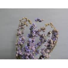 乾燥花-北海道 飛燕草(淺藍)