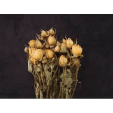乾燥花-北海道 玫瑰(橘)