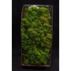 材料-Moss 馴鹿水草(青蘋果綠-155)