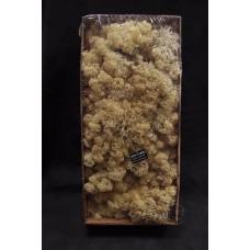 材料-Moss 馴鹿水草(白-156)