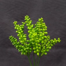 人造多肉-5叉盛夏金錢豆 (淺綠)
