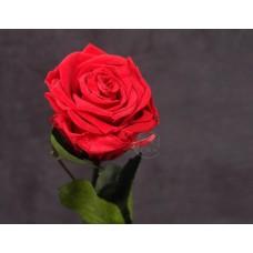 不凋花-Florever 單枝玫瑰 165-51113-5 (櫻桃紅)