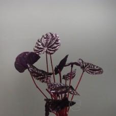 人造多肉-Fian LB0001-LAVShijyran Reef Bush