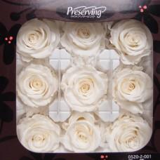 盒裝不凋花-大地農園 玫瑰Rose Kanon M9輪(白)