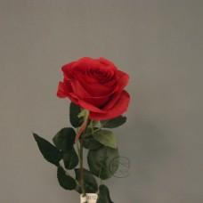 人造花-皇家玫瑰-紅35615