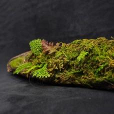 人造枝-樹皮筒+水草