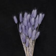 乾燥花-大地農園Lagurus兔尾草(紫)