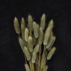 乾燥花-大地農園Lagurus兔尾草(棕灰)