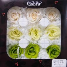 盒裝不凋花-大地農園 Rose Izumi 9輪(黃綠組合)