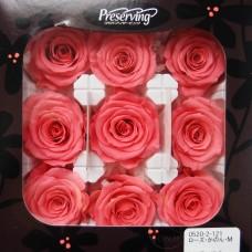 盒裝不凋花-大地農園Rose Kanon M9輪(梅粉)