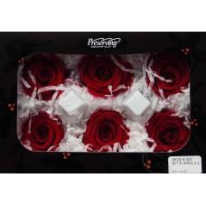 盒裝不凋花-大地農園 玫瑰Rose Kanon LL6輪(酒紅)