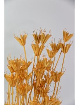 大地農園 乾燥花木百合橙