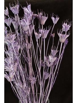 大地農園 乾燥花木百合紫