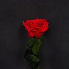 不凋花-FLOREVER 單枝玫瑰FL095-05Rose Cherry Red