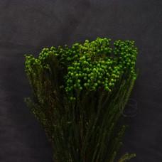不凋花-大地農園 Berzelia小綠果