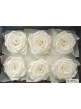 盒裝不凋花-大地農園 Full Bloom Rose L6輪White白