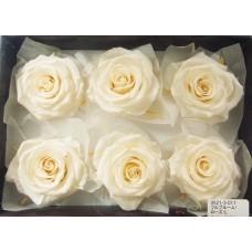 盒裝不凋花-大地農園 Full Bloom Rose L6輪Antique White