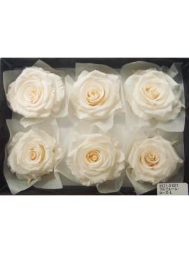 盒裝不凋花-大地農園 Full Bloom Rose L6輪White Champagne淺香檳