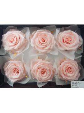 盒裝不凋花-大地農園 Full Bloom Rose L6輪Bridal Pink淺粉