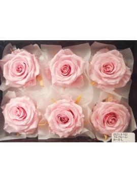 盒裝不凋花-大地農園 Full Bloom Rose L6輪Sherbet Pink
