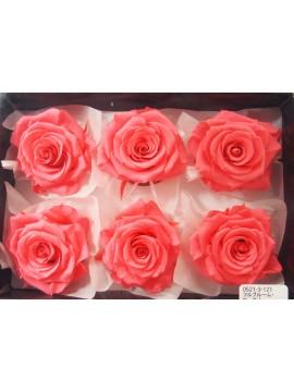 盒裝不凋花-大地農園 Full Bloom Rose L6輪Candy Pink