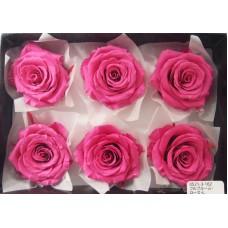 盒裝不凋花-大地農園 Full Bloom Rose L6輪Esprit Pink