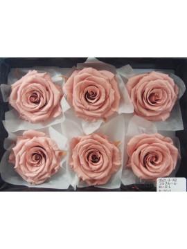 盒裝不凋花-大地農園 Full Bloom Rose L6輪Mauve Pink