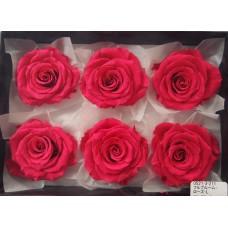 盒裝不凋花-大地農園 Full Bloom Rose L6輪Framboise