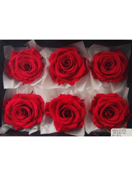 盒裝不凋花-大地農園 Full Bloom Rose L6輪Carnival Rouge