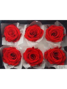 盒裝不凋花-大地農園 Full Bloom Rose L6輪Red