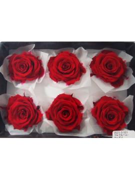 盒裝不凋花-大地農園 Full Bloom Rose L6輪Queen Red
