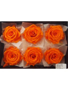 盒裝不凋花-大地農園 Full Bloom Rose L6輪Fruity Orange