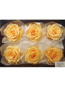 盒裝不凋花-大地農園 Full Bloom Rose L6輪Julia Orange