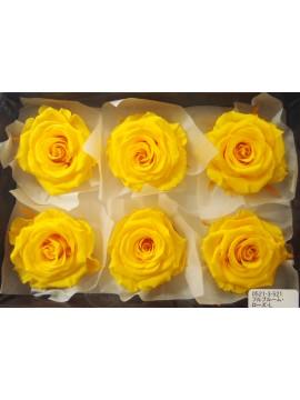 盒裝不凋花-大地農園 Full Bloom Rose L6輪Mimosa Yellow