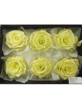 盒裝不凋花-大地農園 Full Bloom Rose L6輪Fresh Green