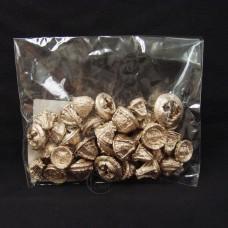乾燥果實-大地農園 Eucalyptus Cone桉樹果實(香檳金)