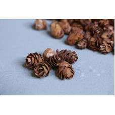乾燥果實 小落葉松果(100克) 約1.5cm