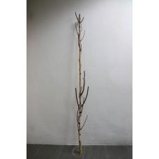 樺木叉枝1.8M