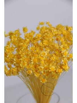 乾燥花 Star Flower Yellow